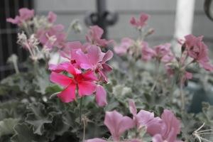 flowerfocus.jpg